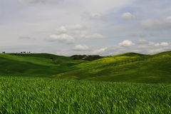 orcia d val Стоковое Фото
