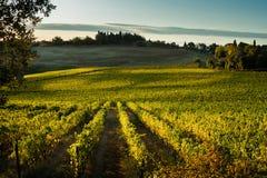 ` ORCIA de VAL D, TUSCANY/ITALY - vinhedo no ` Orcia de Val d imagens de stock