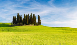 ` ORCIA do SAN QUIRICO D, TOSCÂNIA ITÁLIA com as árvores de cipreste de Rolling Hills e de tuscan Localizado no campo de Orcia do fotos de stock royalty free