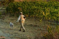 ` ORCIA, TUSCANY/ITALY de VAL D 8 de octubre - viñedo en el ` Orcia de Val d Foto de archivo libre de regalías