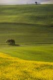 Orciano Pisano, Tuscany, Italien, landskap arkivfoto