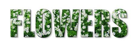 Ord av vita små blommor med gräsplansidor som isoleras på vit arkivbilder
