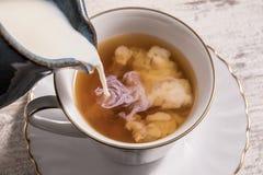 Ordeñe la colada en una taza de té caliente imágenes de archivo libres de regalías