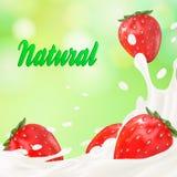 Ordeñe la promoción del sabor del yogur del anuncio o de la fresa 3d chapoteo de la leche con las frutas en blanco Harina de aven Fotografía de archivo libre de regalías