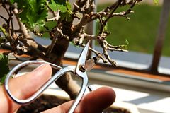 In orde makende bonsai Stock Afbeelding
