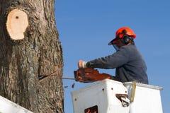 In orde makende de boomtakken van de werkman royalty-vrije stock afbeelding