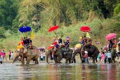 Ordenación del elefante Foto de archivo libre de regalías