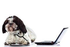 ordenador del perro del doctor aislado en el fondo blanco Imagen de archivo
