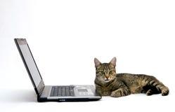 ORDENADOR PORTÁTIL y gato fotos de archivo