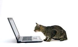ORDENADOR PORTÁTIL y gato Foto de archivo