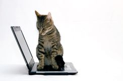 ORDENADOR PORTÁTIL y gato foto de archivo libre de regalías