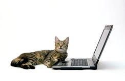 ORDENADOR PORTÁTIL y gato Imagenes de archivo