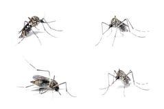 Ordenador principal de la dengue fotografía de archivo libre de regalías