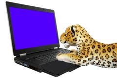 Ordenador y tigre Imagenes de archivo
