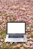 Ordenadores port?tiles con las flores rosadas fotos de archivo libres de regalías