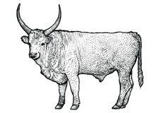 Ordentliche Illustration, Zeichnung, Stich, Linie Kunst, realistisch Stockfotografie