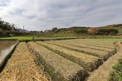 Ordentliches Ackerland auf Berg Stockfotografie