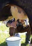 Ordeño de una vaca Fotografía de archivo libre de regalías