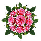 Ordered bouquet of pink rose flowers and buds Stock Photography