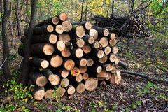 Ordered Timber For Firewood Stock Photo