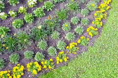 Orderly garden. Very orderly arranged flower bed Royalty Free Stock Photos
