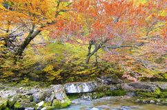 Ordesa. Arazas river in Ordesa National Park, Pyrenees, Huesca, Aragon, Spain Stock Photography