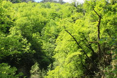ordesapyrenees trees Royaltyfri Fotografi