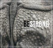 Ordet är starkt Closeup av den starka harnesken av en noshörning royaltyfria bilder