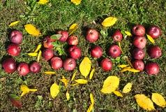Ordförälskelse med röd-mogna äpplen Arkivfoto