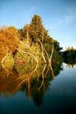 ordflod västra Australien Fotografering för Bildbyråer