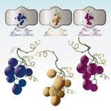 Ordinamenti dell'uva tre con la marca Immagini Stock Libere da Diritti