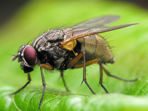 Ordinary fly stock photo