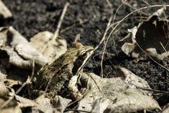 Ordinary frog sits among the grass Stock Photos