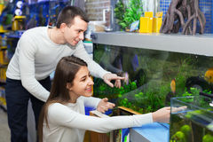 Ordinary happy  smiling customers selecting tropical fish Stock Images