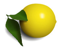 Ordinary lemon with leaves Royalty Free Stock Photography