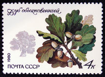 Ordinary oak Quercus robur, the series `Protected trees and shrubs`, circa 1980. MOSCOW, RUSSIA - JANUARY 7, 2017: A stamp printed in the USSR shows ordinary oak Stock Images