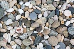 Ordinary stones and sea shells Royalty Free Stock Photography