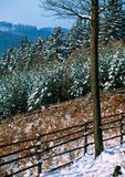 Ordinary winter day in the woods. Illustrations,snow landscape royalty free stock photography