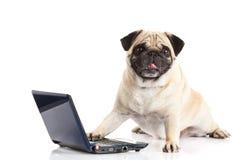 Ordinateur de chien d'isolement sur le fond blanc Photographie stock