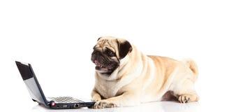 Ordinateur de chien d'isolement sur le fond blanc Photographie stock libre de droits