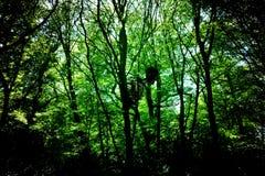Ordinateur de secours dans les bois Photo stock