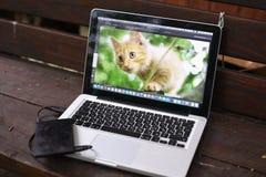 Ordinateur portable de photographes sur le banc en bois de pays avec le chaton rouge Photo stock