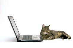 ORDINATEUR PORTABLE et chat Photographie stock libre de droits