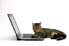 ORDINATEUR PORTABLE et chat Images libres de droits