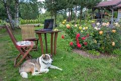Ordinateur portable, téléphone, verres et chien dans le concept indépendant ou à distance anglais de roseraie - de travail Images stock