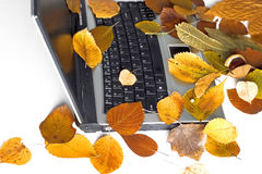 Ordinateur portatif d'automne Images stock