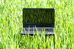 Ordinateur portatif dans l'herbe verte Photo stock