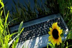 Ordinateur portatif dans l'herbe verte Photographie stock libre de droits