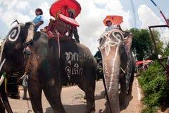 Ordination parade on elephant's back Festival. SURIN,THAILAND-MAY 23 : Ordination Parade on Elephant's Back Festival is when elephants parade royalty free stock photo