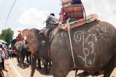 Ordination parade on elephant's back Festival. SURIN,THAILAND-MAY 23 : Ordination Parade on Elephant's Back Festival is when elephants parade stock images